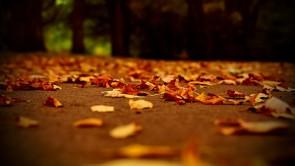 Златна есен със закуска на блок маса